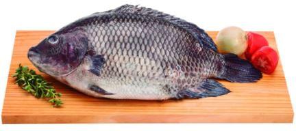 Peixe-Tilapia-Inteiro-Congelado